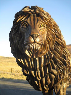 LION SPOTTED IN KERRVILLE