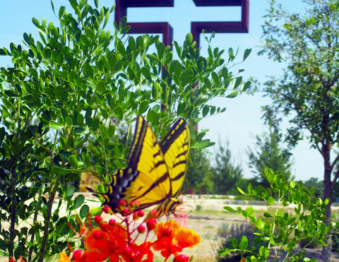 Beautiful Butterfly Photo Taken at the Prayer Garden by Max Greiner Jr.